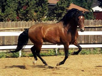 Mejores caballos del mundo, mejores razas