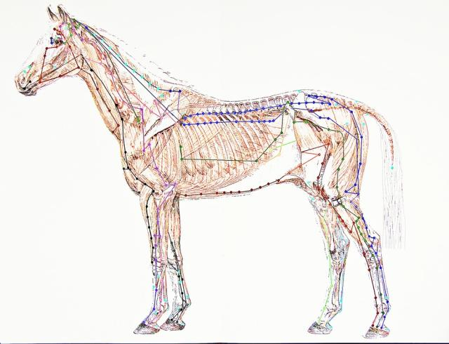 Acupuncture Humans And Horses