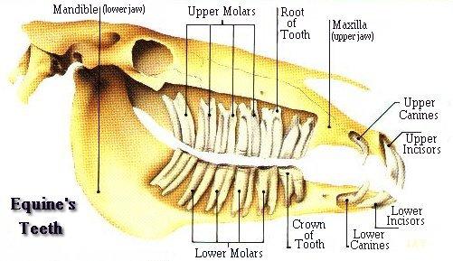 Floating Teeth