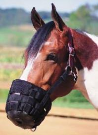 Horse Muzzle with breakaway leather strap.