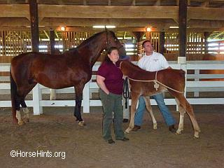 Image: Copyright HorseHints.org/Working with foal