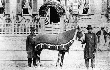 Image: Public Domain/Lincoln's horse Old Bob, on the day of his funeral in 1865, held by Rev. H. Brown