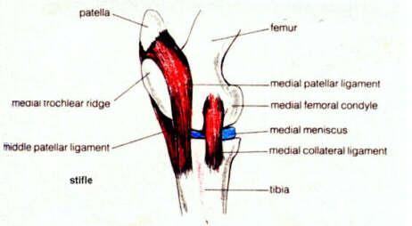 Tratamentul simptomelor osteochondrozei medicamentului